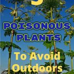 poisonous plant