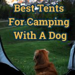 dog in a camping tent