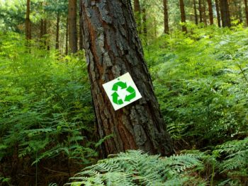 recycle sign on a tree