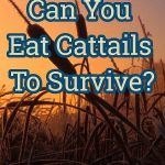 can you eat cattails?
