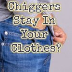 Can chiggers stay in your clothes?